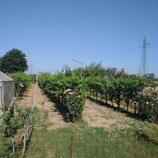empoli-terreno-agricolo-piante